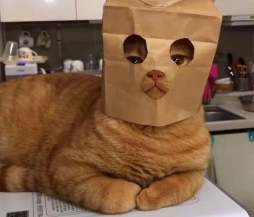 资源猫:7个合法暴利项目,没本钱日赚300-500元